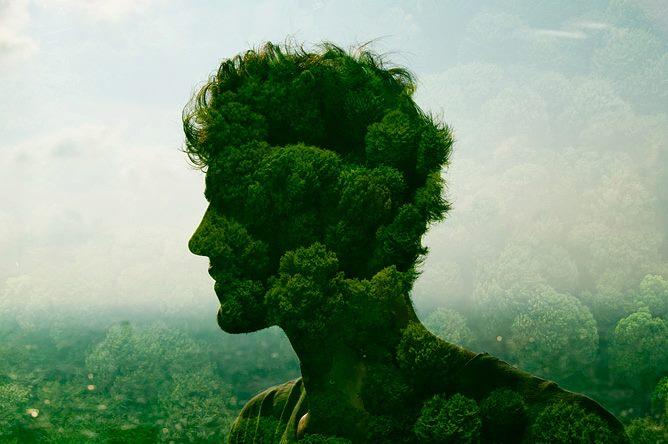 Hoja En Verde y su onírico recorrido emocional